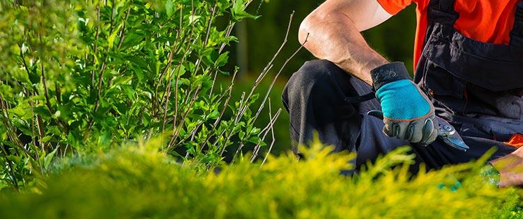 Aménagement extérieur - L\'essentiel sur le jardinage et le ...